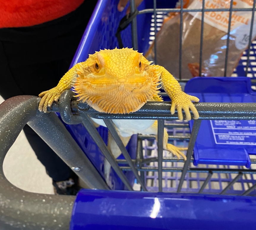 Discovering The World of Reptiles At Petsmart
